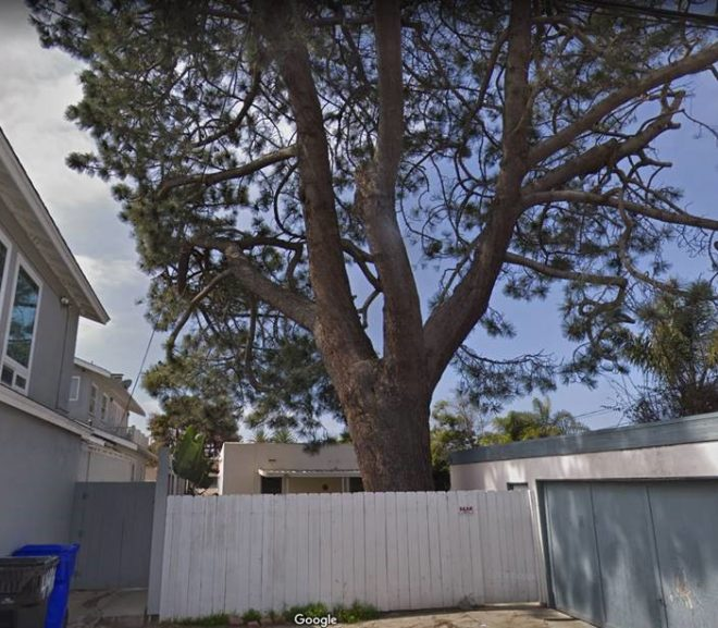 San Diego Property Management is a Serious Business – Tree Issue
